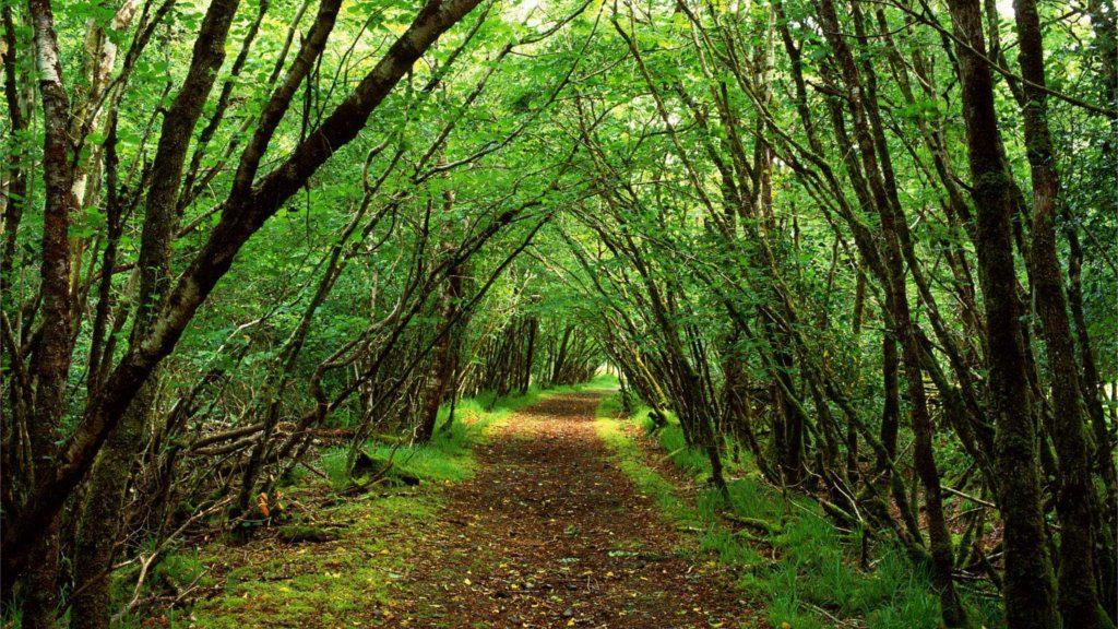 Quintana Fiscal. Planificación Fiscal a Largo Plazo. El bosque fiscal